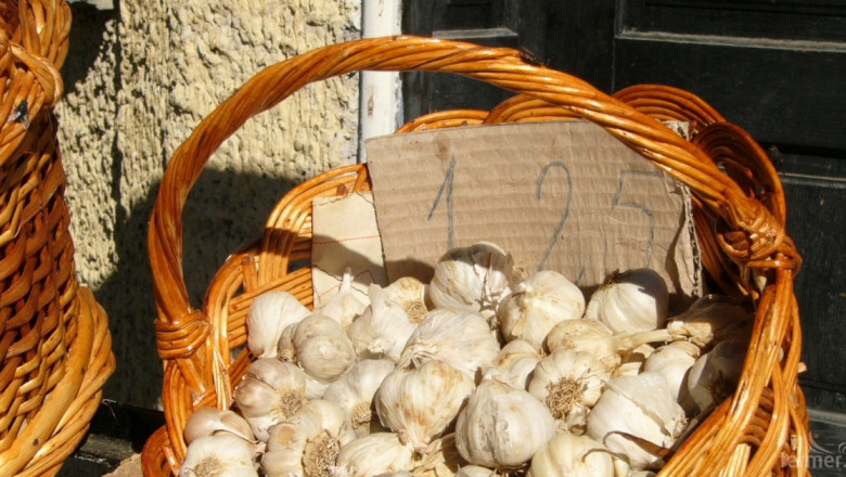 Фермери отново залагат на чесъна под влияние на износа от Китай