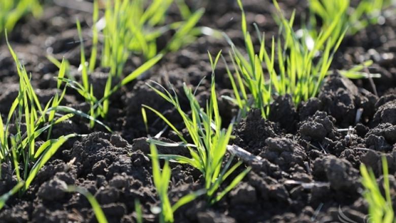 Започват проверки на посевите от пшеница в Добричкия регион