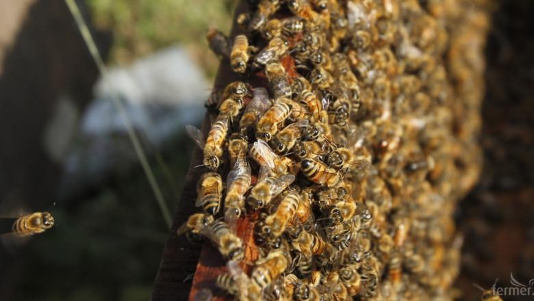 Как медоносни пчели могат да доведат до изчезване на местни растения?