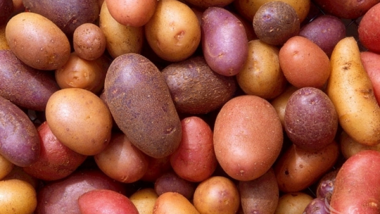 Червени картофи излизат на мода в Германия