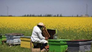 Зачестяват проверките на български биопродукти в ЕС