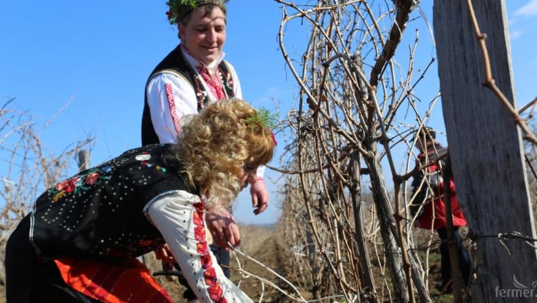 Нови винени сортове навлизат в България - Сира, Каберне фран, Пино ноар