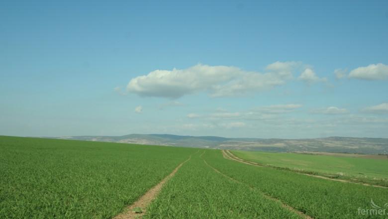 Учен: Посевите са в прекрасно състояние, не бързайте да торите