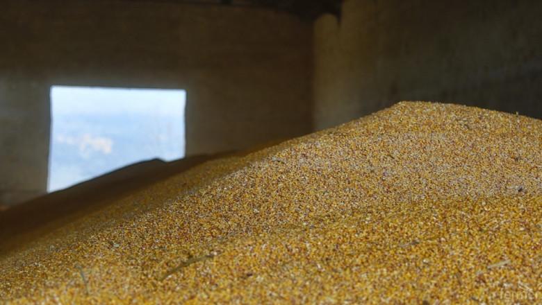 Пшеницата и царевицата поскъпнаха леко на световните борси