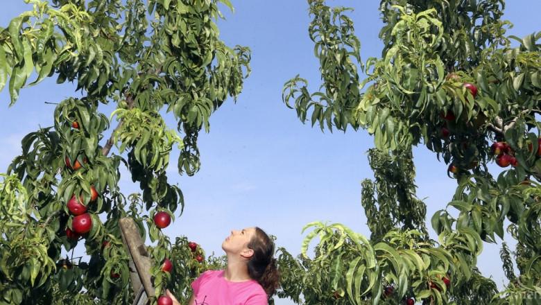 Започва прием на документи за помощ при купуване на продукти за растителна защита