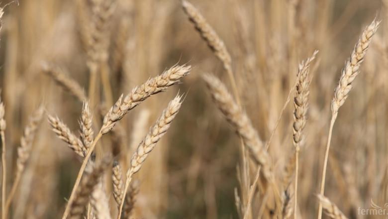 Пшеница: Фондовата борса е във възход