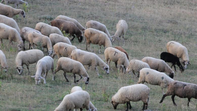 Животновъди ще получат над 31 млн. лева
