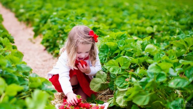 Земеделието в ЕС ще загуби 28% от работната си ръка до 2030 г.