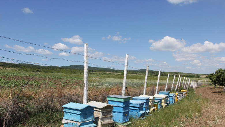 УС на ДФЗ реши да отпуснe de minimis за пчеларите