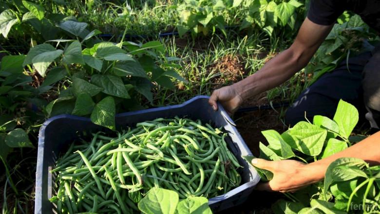 Цифрови ферми увеличават реколтата 100 пъти