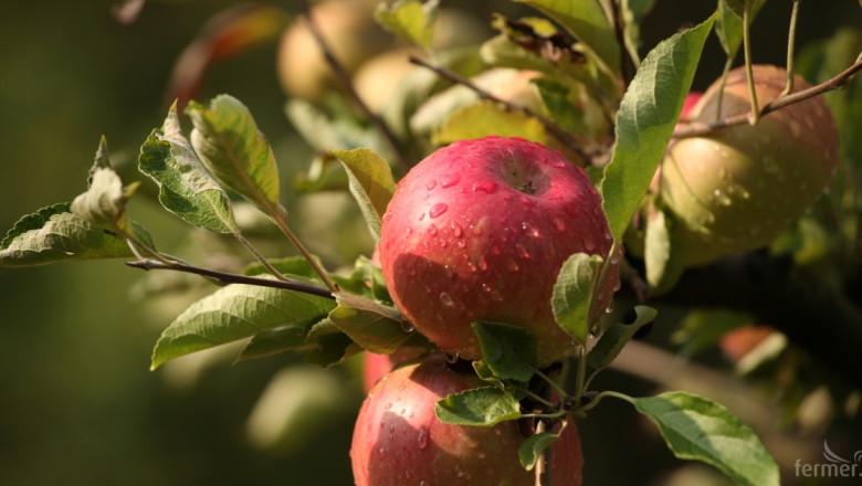 Драматичен сезон за ябълките в цяла Европа, но не и в България
