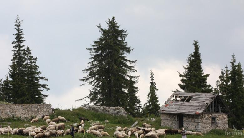 Грузия за ОСП: Субсидиите водят до лоши практики