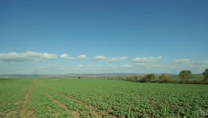 Агрометеорология: Пшеницата и ечемикът са във фаза на наливане на зърното