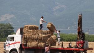 ДФЗ отсрочва кредити на животновъди за закупен на фураж