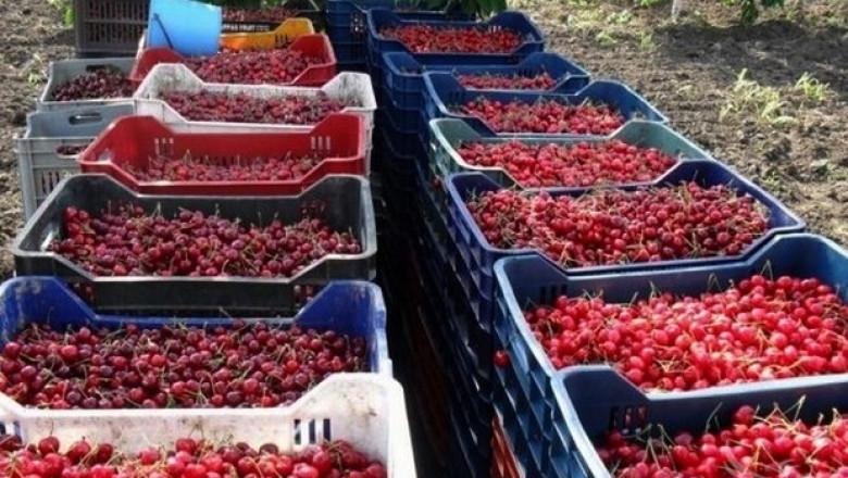 Фермер: Пазарът на кюстендилските череши е в Румъния и нашето Черноморие