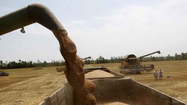 1/3 от износа за Великобритания е в зърно - слънчоглед и царевица