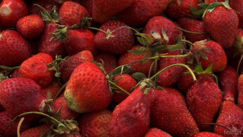 Нова производствена база за преработка и консервиране на плодове откриха в Летница