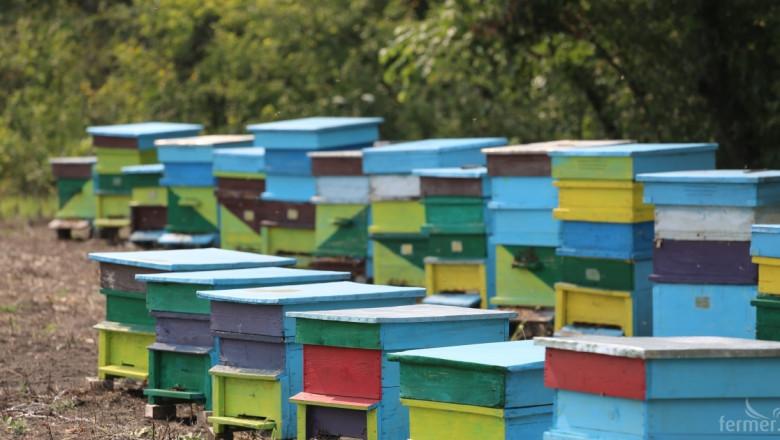 Полицията разследва поредна кражба на 40 пчелни кошера