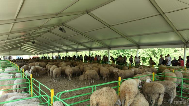 Набират участници за Националния събор на овцевъдите през май