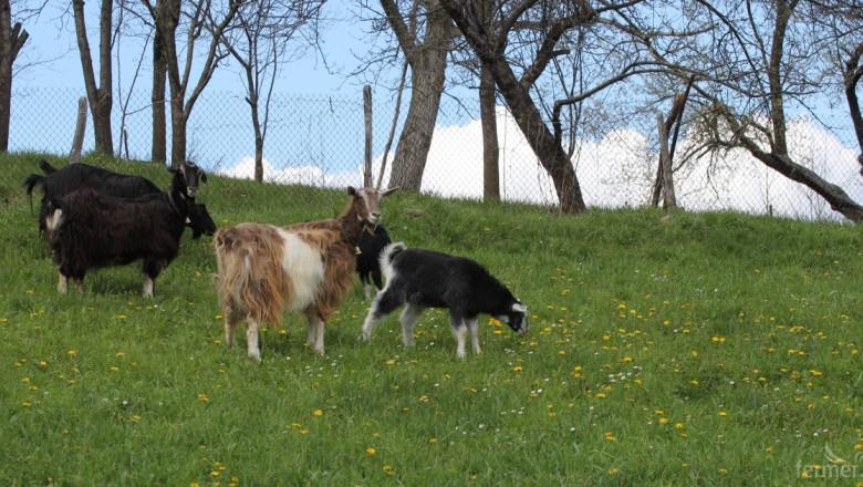 Забраняват пашата на животни в необлагодетелстваните райони на Перник (ЗАПОВЕД)