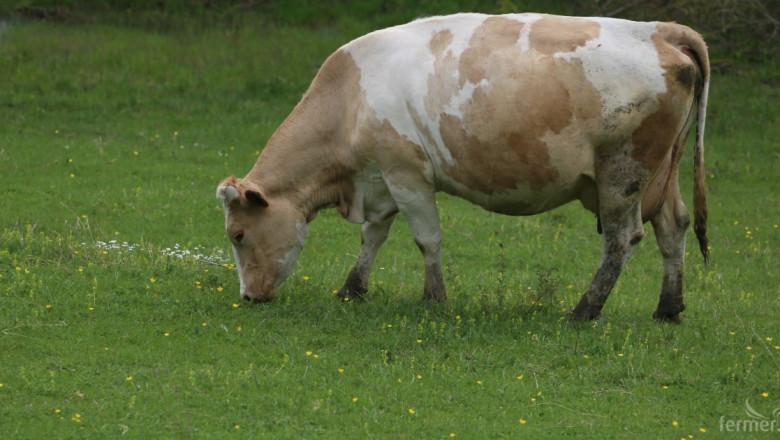 НСГБ стартира разяснителни кампании за суровото мляко