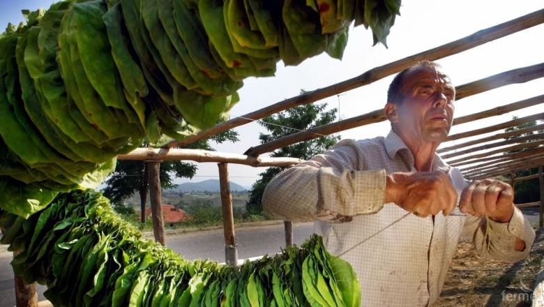 Комисии по тютюна ще заработят към Областните дирекции Земеделие