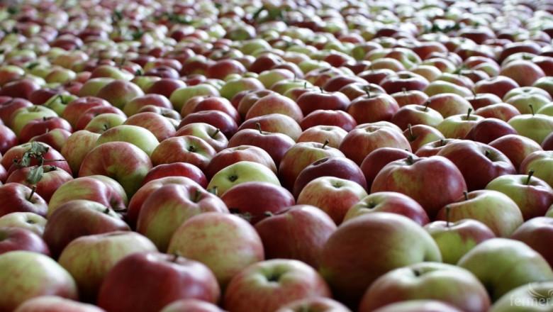 Индия отвори пазара си за ябълки от Европейския съюз