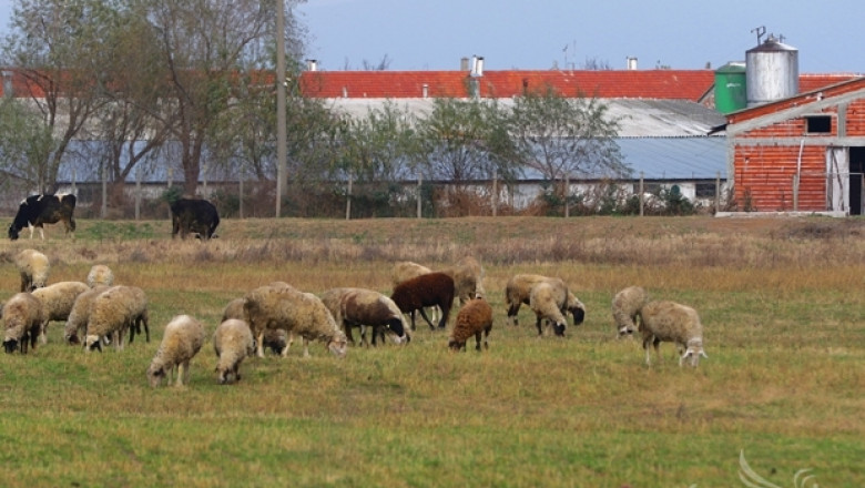 Предлагат субсидии за животни от 2017 г. да се дават с доказана реализация (ВИДЕО)