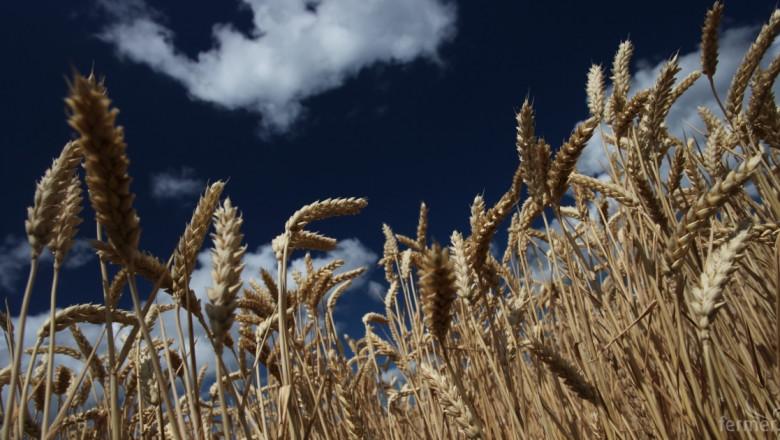 Нестабилност в цената на пшеницата очаква Rabobank през 2016