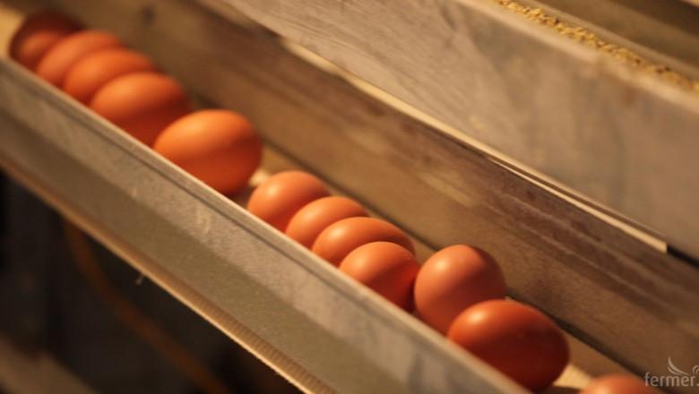 Яйцата в Швеция държат най-високи цени на едро в ЕС