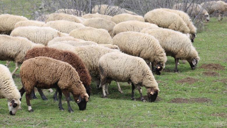 Съветът по животновъдство във Варна кани фермери на заседание на 25 ноември