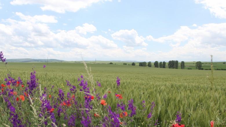Официално: България остава страна, свободна от ГМО културите