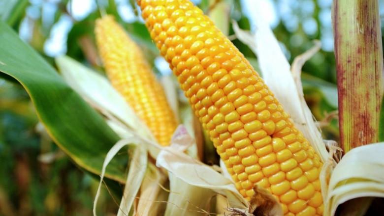 Франция поиска от ЕК да бъде изключена списъка за отглеждане на ГМО царевица