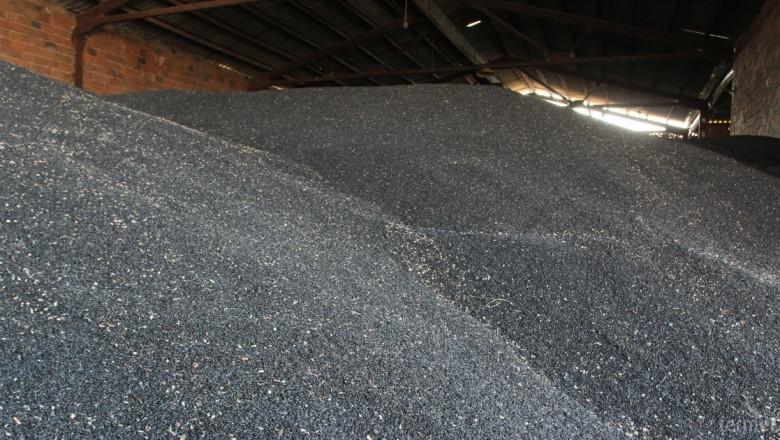 Слънчогледът във Видинско е ожънат на 50% при добив 100-120 кг./дка