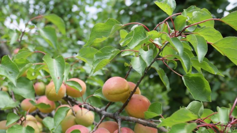 ДФЗ започва прием по схемата Училищен плод на 17 август