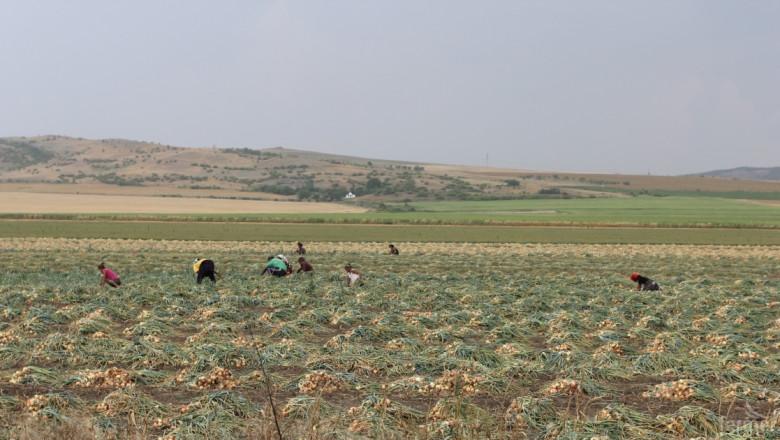 Главна инспекция по труда погна земеделските производители с данни от МЗХ