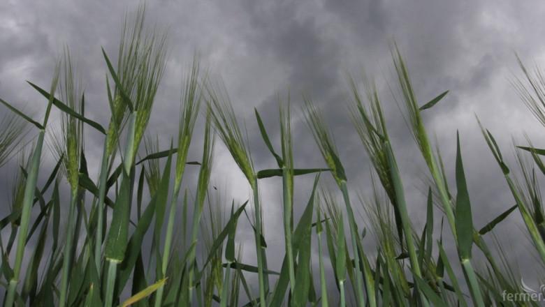 Закриват Националната служба по зърното?