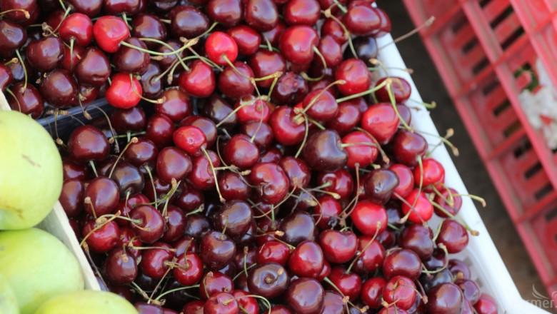 Фермери се кооперират в търсене на нови пазари на плодове (ИНТЕРВЮ)