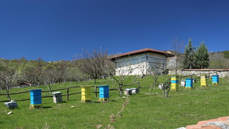 Въвеждат нови изисквания към пчелния мед
