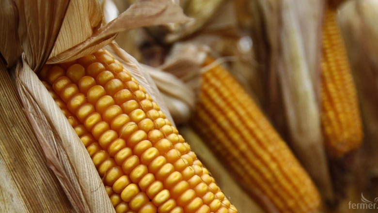 Цената на царевицата през март е 270 - 300 лева/тон