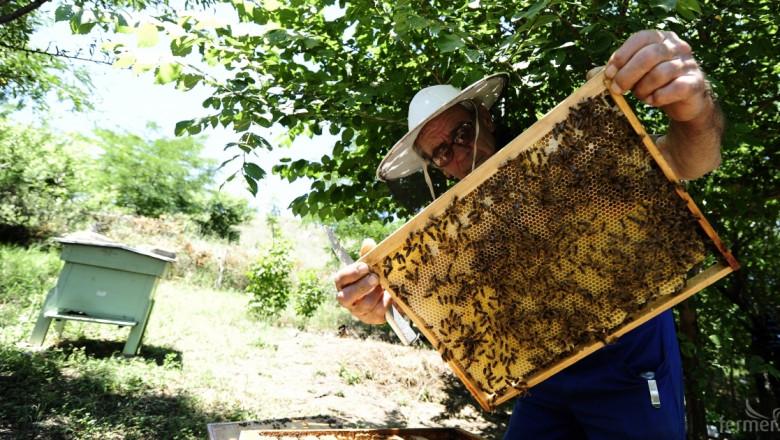 МЗХ обучава ветеринарни лекари за профилактиката на пчелите