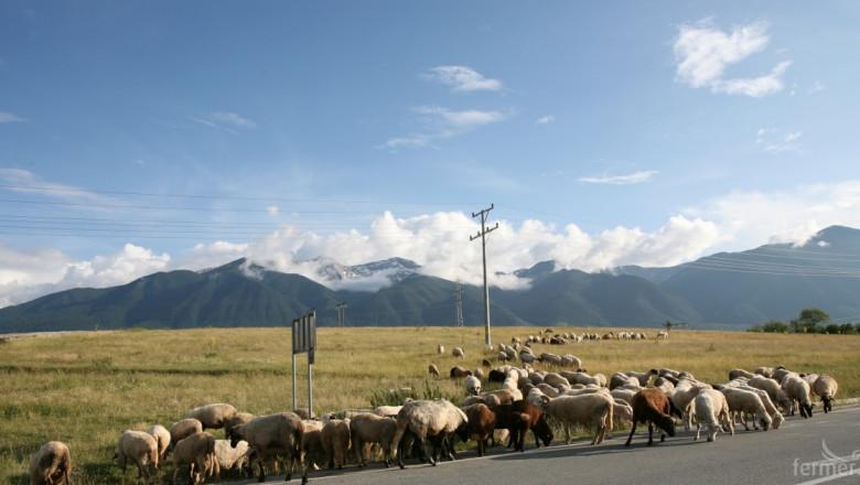 Какви са условията за национални субсидии за овце и кози?