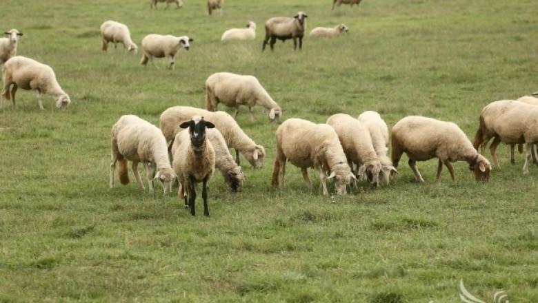 Изплатени са обезщетенията за умрели животни от Син език в Кърджалийско