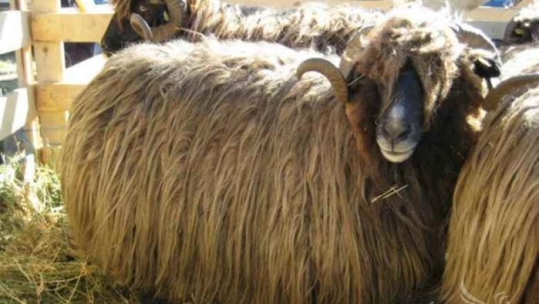 Изложение за редки породи животни ще се проведе в село Крупник
