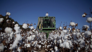 Субсидии за памук 66 евро/дка. ще получават фермерите от 2015-та