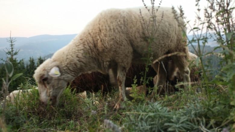 Нови огнища на Син език в Шуменско. Положителни проби има и в Силистренско