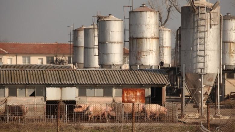 Близо 5 млн. лв. ще получат животновъди за хуманно отношение към свине и птици