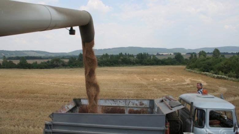 Пазар за пшеница в Монтанско все още няма. 260-270 лв/т е цената за фуражно зърно