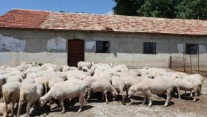 Предпазни зони срещу Син език изграждат в Южна България