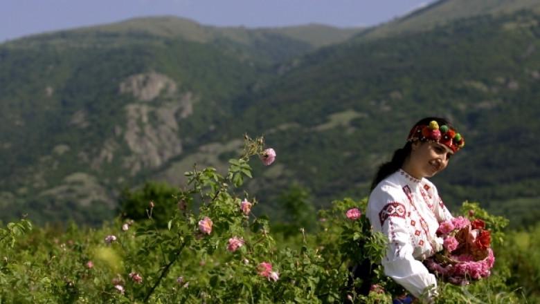 Бялата маслодайна роза – отлична култура за био производство